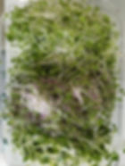 Kale,SpicySalad Mix&Daikon.jpg