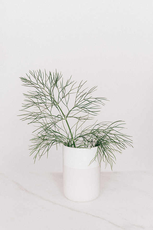 white-vase-with-thin-leaved-plant-421078