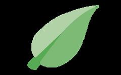 fullife pharmacy leaf on transparaent ba