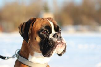 Oskar der Boxer