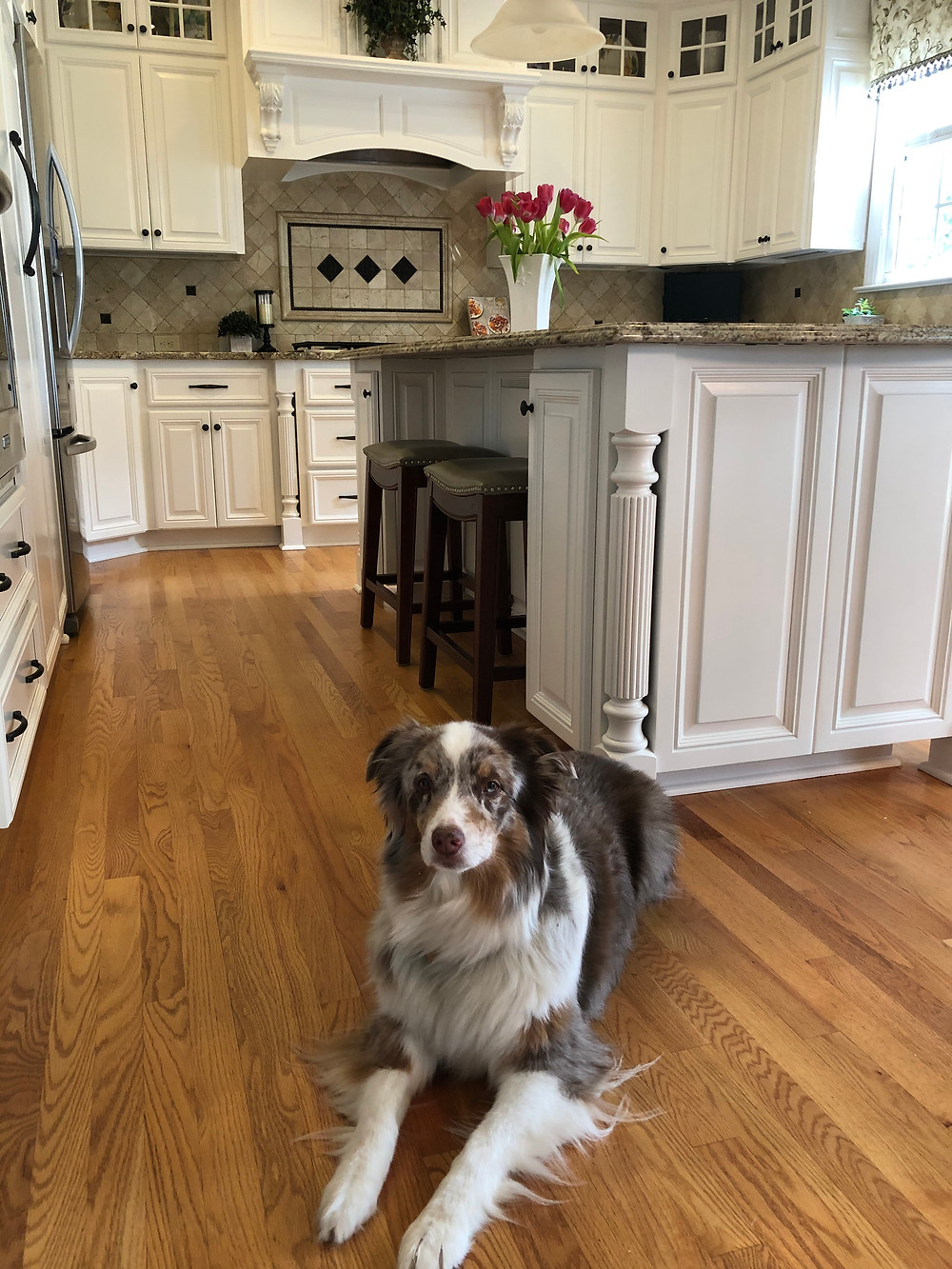 Dog laying down in a kitchen