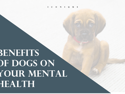 Benefits Of Owning A Dog For Your Mental Health