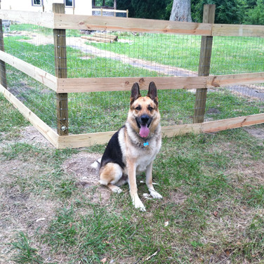 Logan approves of the new fence!