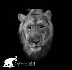 lion king portrait