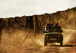Gir national park safari.jpg