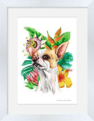 Chihuahua Flores