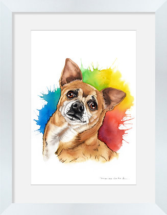 Chihuahua Color