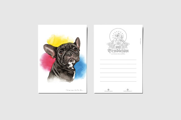 Frenchie Color