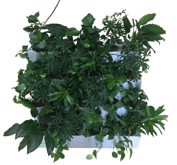 Greenful Element Wall bij PLNT close-up