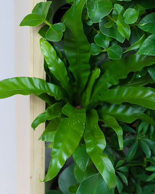 Greenful Divider-min.jpg