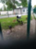 Parc Compiegne.jpg
