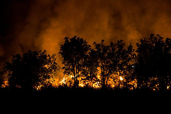 project-energy-wildfire-mitigation.jpg