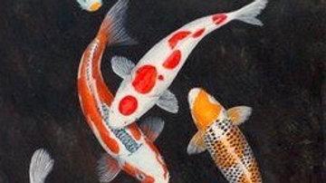 Koi Fish 6
