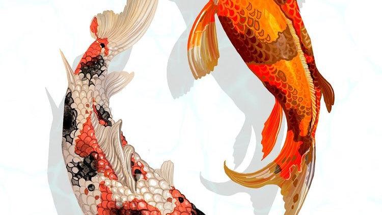 Koi Fish 7