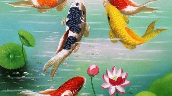 Koi Fish 3
