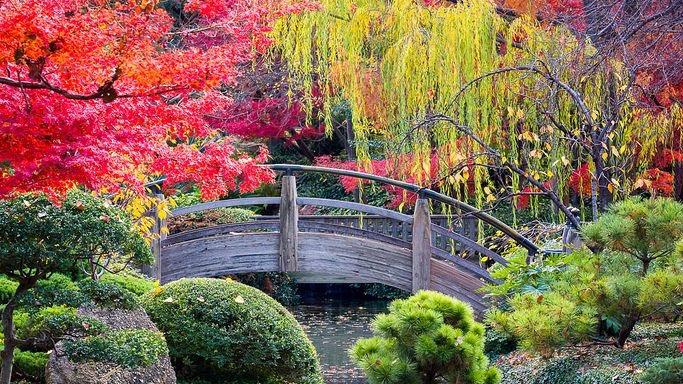 Beautiful Trees 11