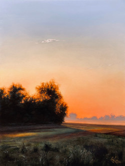 Dawn Summer