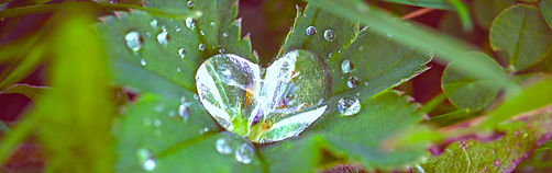 1_close-up-dew-drops-217893_ready.jpg