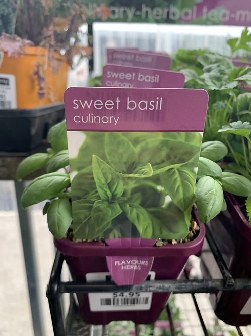 SWEET BASIL CULINARY POT SINGLE