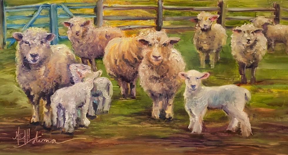 The Sheep at Wandering Streams