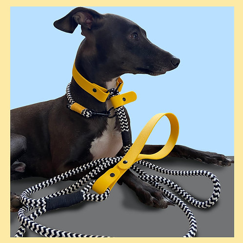 The Bumblebee Quick Release & Day Collar Set