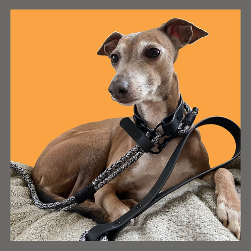 The Grey Fleck Quick Release Lead & Day Collar Set