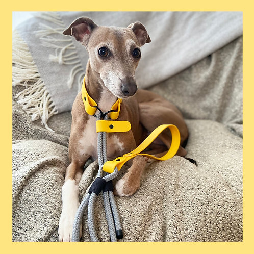 Singing in the Rain Quick Release Lead & Day Collar