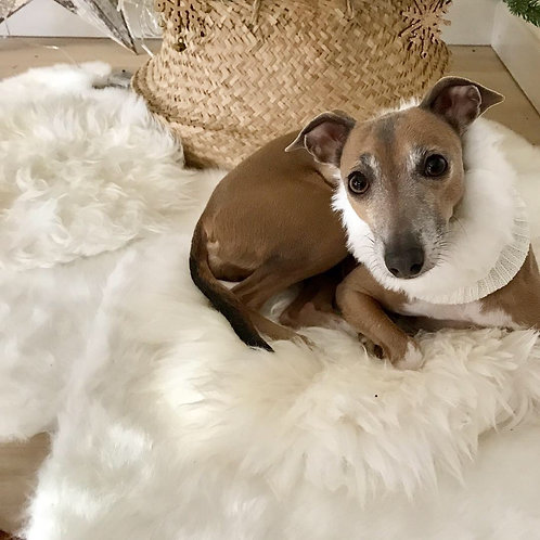 Fluffy snood for small dogs like Italian Greyhounds & Dachshunds