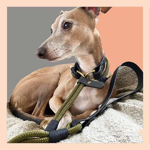 Army Green Easy Release Lead / Day Collar