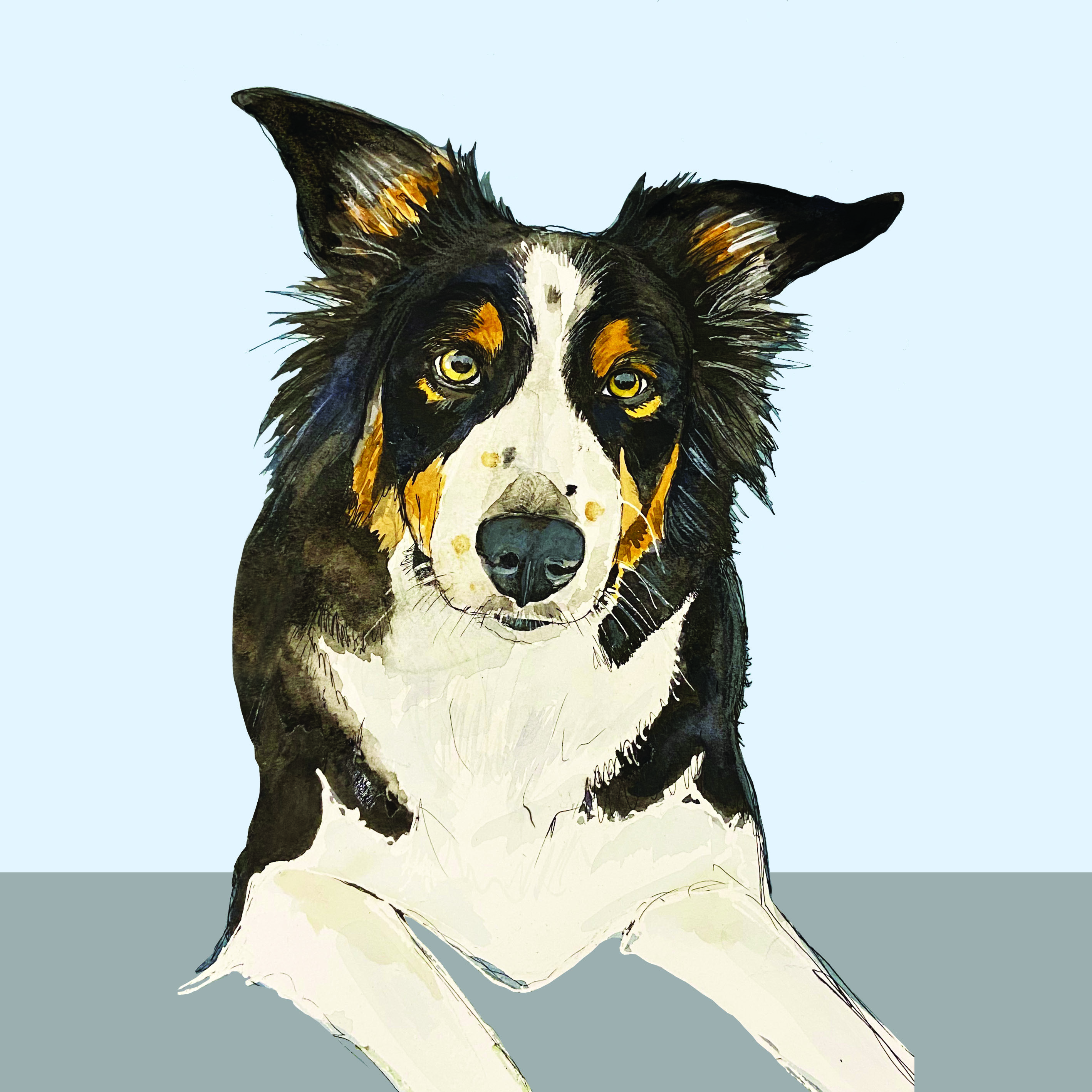 Collie Instagram