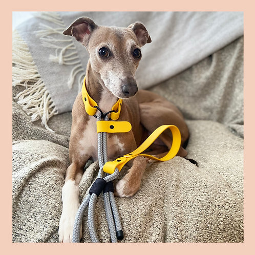 Grey Easy Release Lead /Day Collar