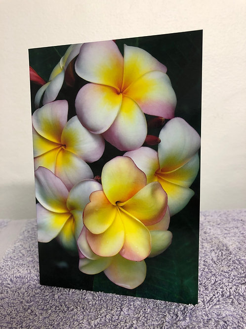 Frangipani greeting card with custom message