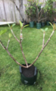 tree10.jpg