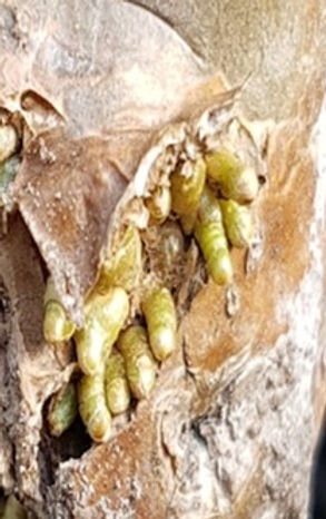 ariel roots.jpg