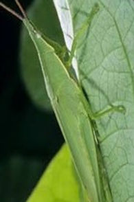 grasshoppers.jpg