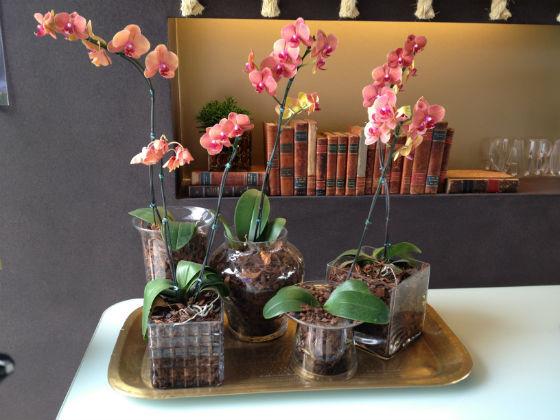 Blog-Harmonizando-com-flores-Adriana-Leal-Design-de-Interiores-6.jpg