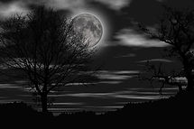 night-4514639.jpg