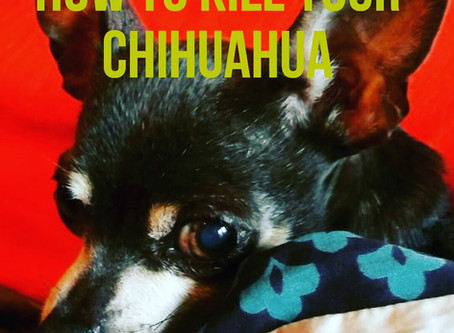 How to Kill Your Chihuahua