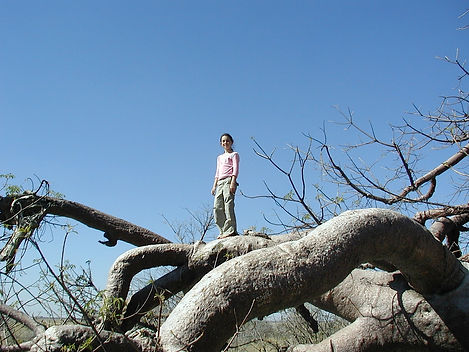 Emily climbing the roots of a Baobab tree