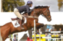 Jacquie Webb Physiotherapist Show jumping