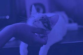 emotional-support-cat-e1530559015542_edi