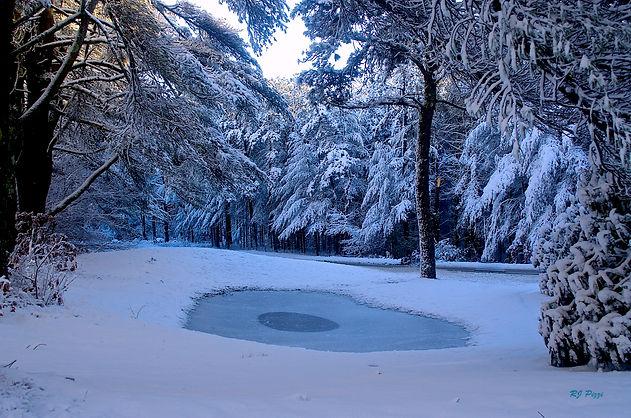 30-Frozen Pond, Pinehills.jpg