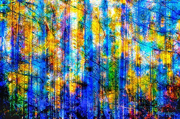 14-Birch-Lite-Abstract.jpg