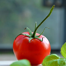 basil-tomato-vegetable-8082.jpg