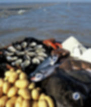 Poissons et crustacés, sel et pommes de terre