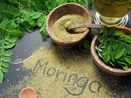 "Focus : Moringa oleifera ""l'arbre de vie"""