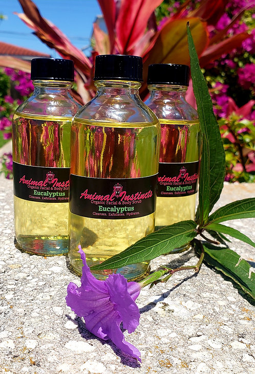 Eucalyptus Infused Avocado Oil (4oz)