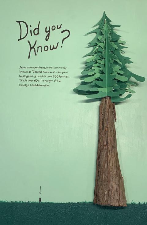 Justin Pinheiro, Coastal Redwoods