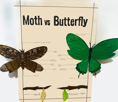 Taryn Kennedy, Moth vs. Butterfly