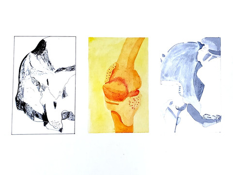Beth Bertoni, Observational Drawing Series